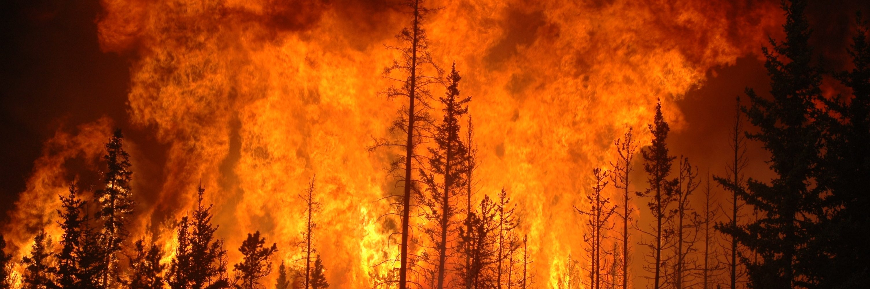 Assistance to members affected by the BC Wildfires